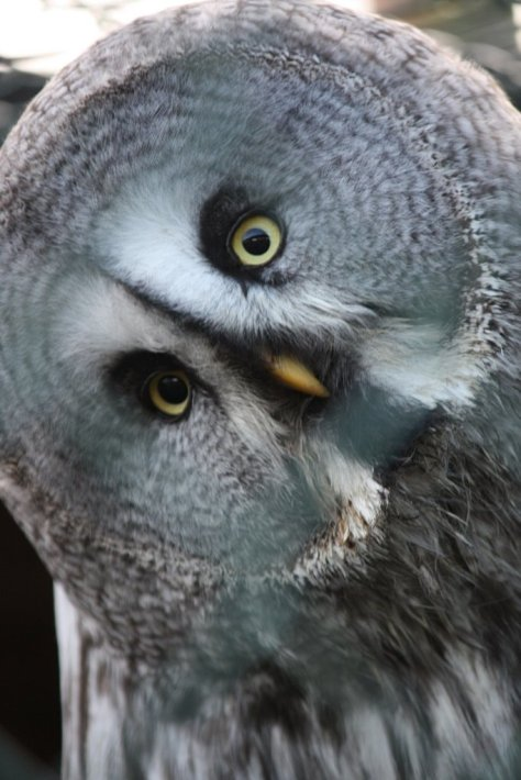 Dave Owl